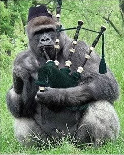 gorilla bag piper